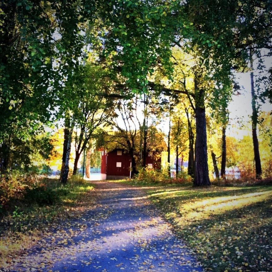 A Fall Walk in #mymariestad