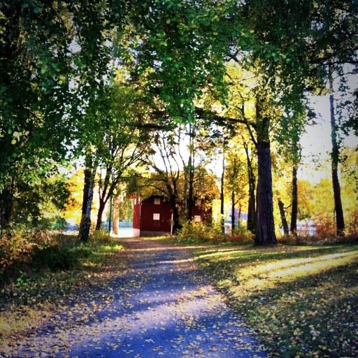 My View... Fall Walk